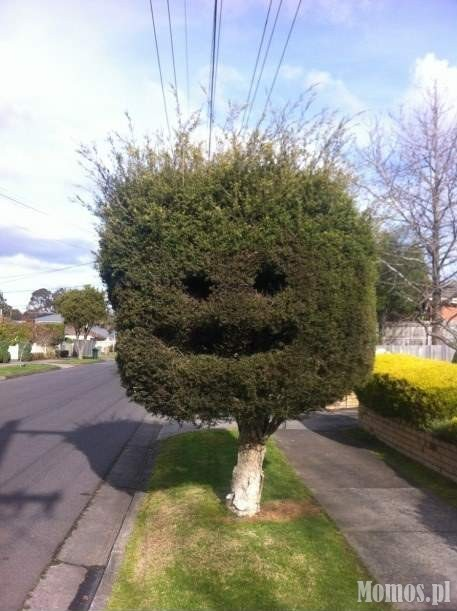 Happy tree